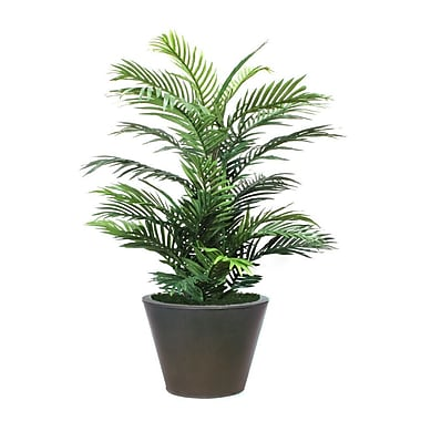 Fleur De Lis Living Palm Plant in Planter; Brown