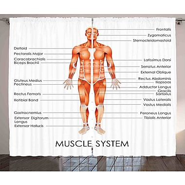 Ambesonne Human Anatomy Graphic Print and Text Semi-Sheer Rod pocket Curtain Panel (Set of 2)