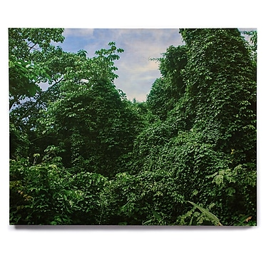 East Urban Home 'Forest In The Sky' Photographic Print on Wood; 16'' H x 20'' W x 1'' D