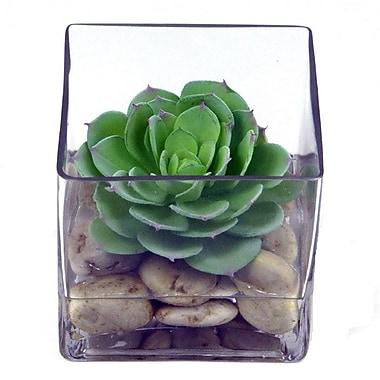 Creative Branch Faux Echeveria in Glass Cube
