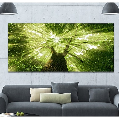 DesignArt 'Sunlight Peeking through Green Tree' Photographic Print on Wrapped Canvas