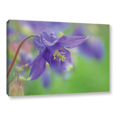 Red Barrel Studio Blue Columbine Photographic Print on Wrapped Canvas; 16'' H x 24'' W x 2'' D
