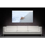 3 Panel Photo 'Starfish' Photographic Print on Wrapped Canvas; 24'' H x 36'' W