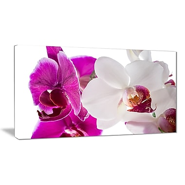 East Urban Home Blooming Orchid Flowers Graphic Art Print on Canvas; 32 '' W x 16 '' H