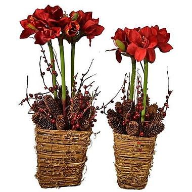 The Holiday Aisle Amaryllis Mixed 2 Piece Floral Arrangement Set