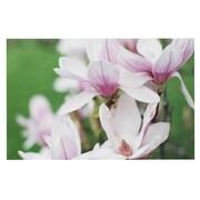 East Urban Home Angie Turner 'Magnolias' Doormat