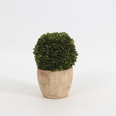 Boxwood Ball On Pot, Large, 4.8