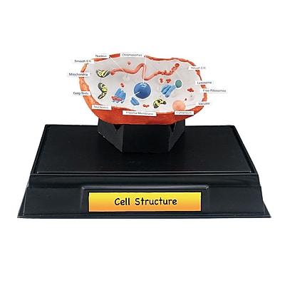 Scene-A-Rama Scene-a-rama Cell Structure