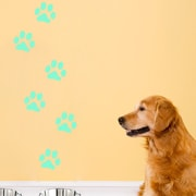 Walplus Paw prints Glowing Wall Decal