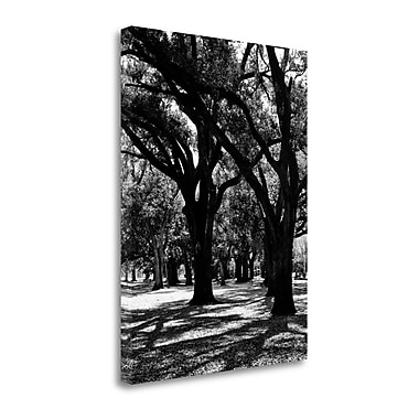 Tangletown Fine Art 'Oak Tree Study' by Jeff Graphic Art on Wrapped Canvas; 26'' H x 20'' W