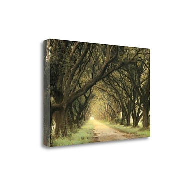 Tangletown Fine Art 'Evergreen Alley' by William Guion Photographic Print on Wrapped Canvas