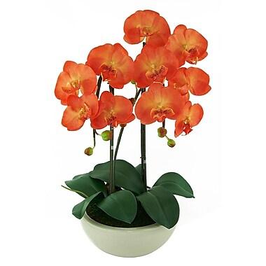 Red Vanilla Phalaenopsis Orchids Floral Arrangement in Pot
