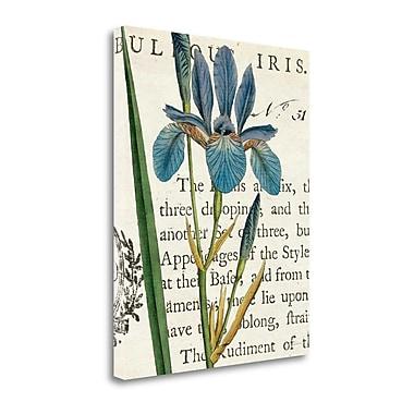 Tangletown Fine Art 'Iris Letter' Graphic Art Print on Canvas; 40'' H x 32'' W