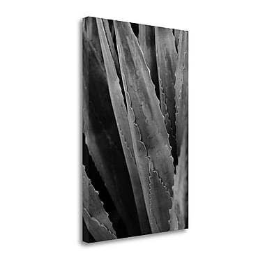 Tangletown Fine Art 'Abstract Agava IV' by Elizabeth Urquhart Photographic Print on Wrapped Canvas