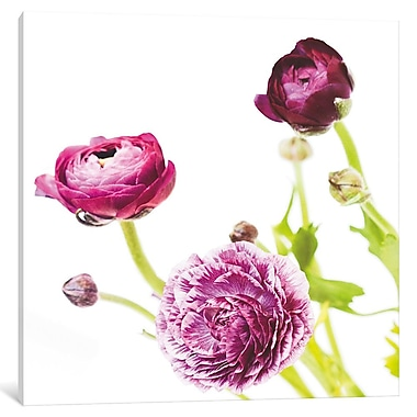 Ebern Designs 'Spring Ranunculus II' Graphic Art on Wrapped Canvas; 12'' H x 12'' W x 0.75'' D