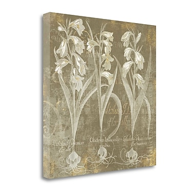 Tangletown Fine Art 'Flower Lines I' by Sue Schlabach Graphic Art on Wrapped Canvas; 20'' H x 20'' W