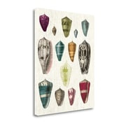 'Colorful Shell Assortment I' by Wild Apple Portfolio Graphic Art on Wrapped Canvas
