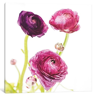 Ebern Designs 'Spring Ranunculus I' Graphic Art on Wrapped Canvas; 18'' H x 18'' W x 1.5'' D