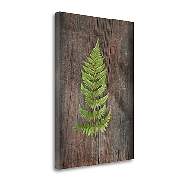 Tangletown Fine Art 'Woodland Fern I' by Sue Schlabach Photographic Print on Wrapped Canvas