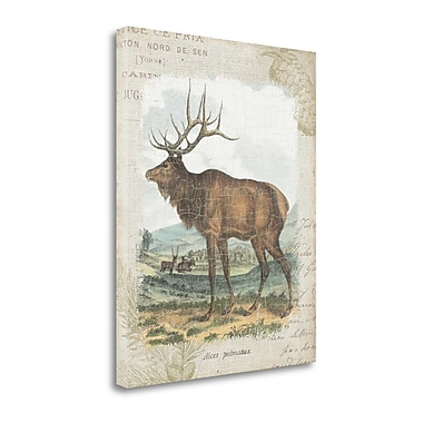 Tangletown Fine Art 'Woodland Stag II' by Wild Apple Portfolio Graphic Art on Wrapped Canvas