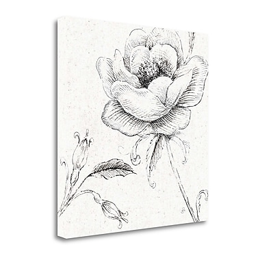 Tangletown Fine Art Blossom Sketches II by Daphne Brissonnet Painting Print on Wrapper Canvas