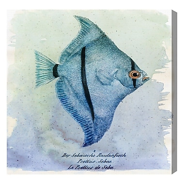 Highland Dunes 'Seba Fish' Graphic Art Print on Canvas; 16'' H x 16'' W x 2'' D