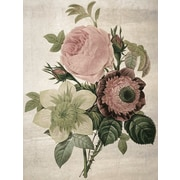 Ophelia & Co. 'Peonies Redoute' Graphic Art Print on Canvas