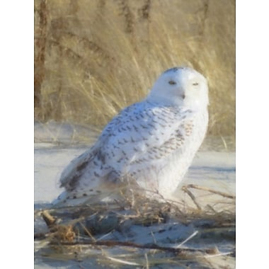 Highland Dunes 'Snowy Owl Sighting' Photographic Print on Canvas