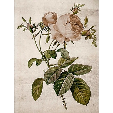 Ophelia & Co. 'Rosa Centifolia Redoute' Graphic Art Print on Canvas