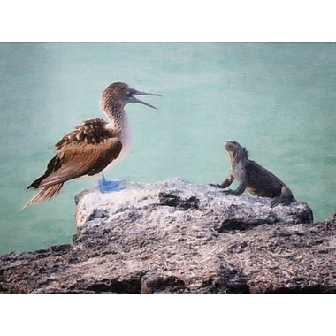 Latitude Run 'Galapagos Blue-Footed Booby Lecture' Photographic Print on Canvas