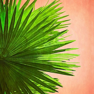 Bay Isle Home 'Palm Frond on Pink' Graphic Art Print on Canvas