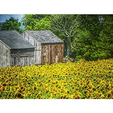 August Grove 'Sunflower Field and Barns' Graphic Art Print on Canvas