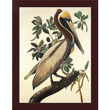 East Urban Home 'Brown Pelican' Framed Graphic Art Print; 18'' H x 14'' W