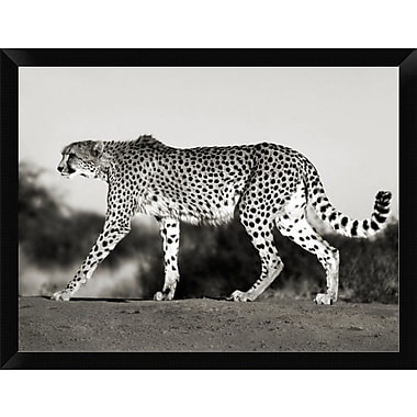 East Urban Home 'Cheetah Namibia Africa' Framed Photographic Print; 12'' H x 16'' W