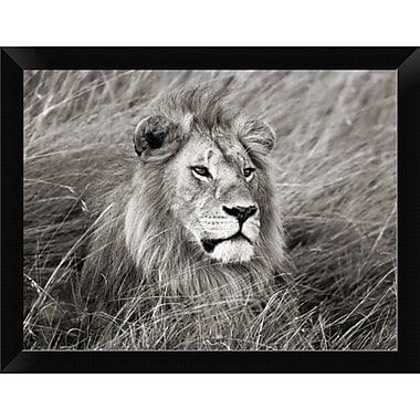 East Urban Home 'African Lion Masai Mara Kenya' Framed Photographic Print; 9'' H x 12'' W