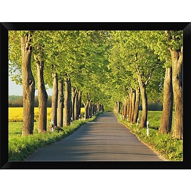 East Urban Home 'Lime Tree Alley Mecklenburg Lake District Germany' Framed Oil Painting Print