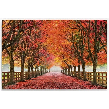 August Grove 'North Bend Trees' Photographic Print on Wrapped Canvas; 24'' H x 36'' W