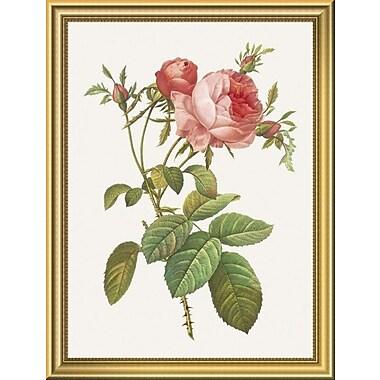 East Urban Home 'Rosa Centrifolia Foliacea' Framed Graphic Art Print; 18'' H x 14'' W