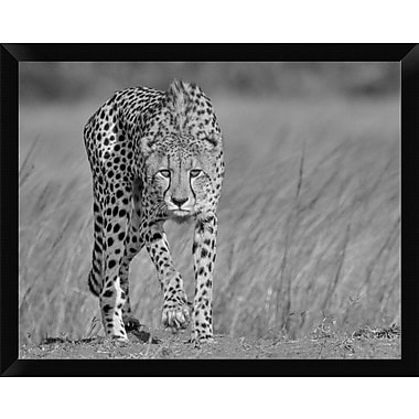 East Urban Home 'Focused Predator' Framed Photographic Print; 12'' H x 16'' W