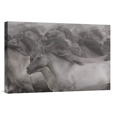 Global Gallery 'Wildhorses' by Dieter Uhlig Photographic Print on Wrapped Canvas