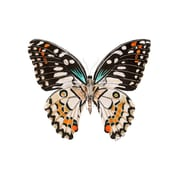 Latitude Run 'Butterfly Portrait' Acrylic Painting Print; 23'' H x 29'' W