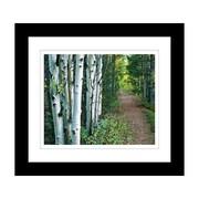 """Northland Art Birch Path by Elizabeth Langdon, 34""""x 38"""" (ELAN30)"""