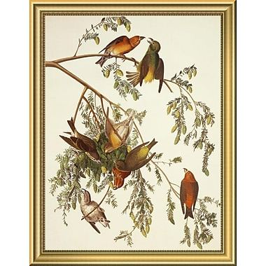 East Urban Home 'American Crossbill' Framed Graphic Art Print; 18 H x 14 W