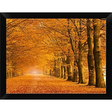 East Urban Home 'Woods' Framed Photographic Print; 9'' H x 12'' W