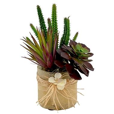 Highland Dunes Mixed Succulent Arrangement Desk Top Plant in Decorative Vase