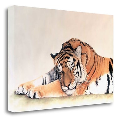 Tangletown Fine Art 'Sleeping Tiger' Photographic Print on Wrapped Canvas; 26'' H x 39'' W