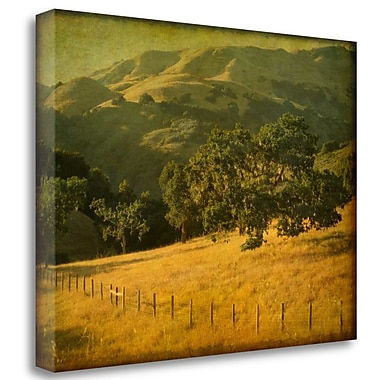 Tangletown Fine Art 'Oak and Fence' Photographic Print on Wrapped Canvas; 24'' H x 32'' W