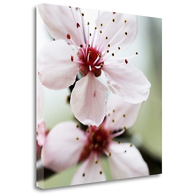 Tangletown Fine Art 'Cherry Flower 2' Graphic Art Print on Wrapped Canvas; 23'' H x 23'' W