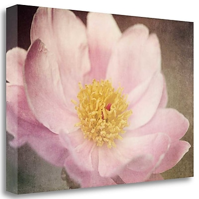 Tangletown Fine Art 'Peony' Photographic Print on Wrapped Canvas; 19'' H x 28'' W