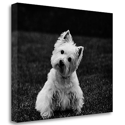 Tangletown Fine Art 'Winnie' Photographic Print on Wrapped Canvas; 27'' H x 35'' W